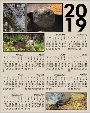 2019 Calendar Wildlife